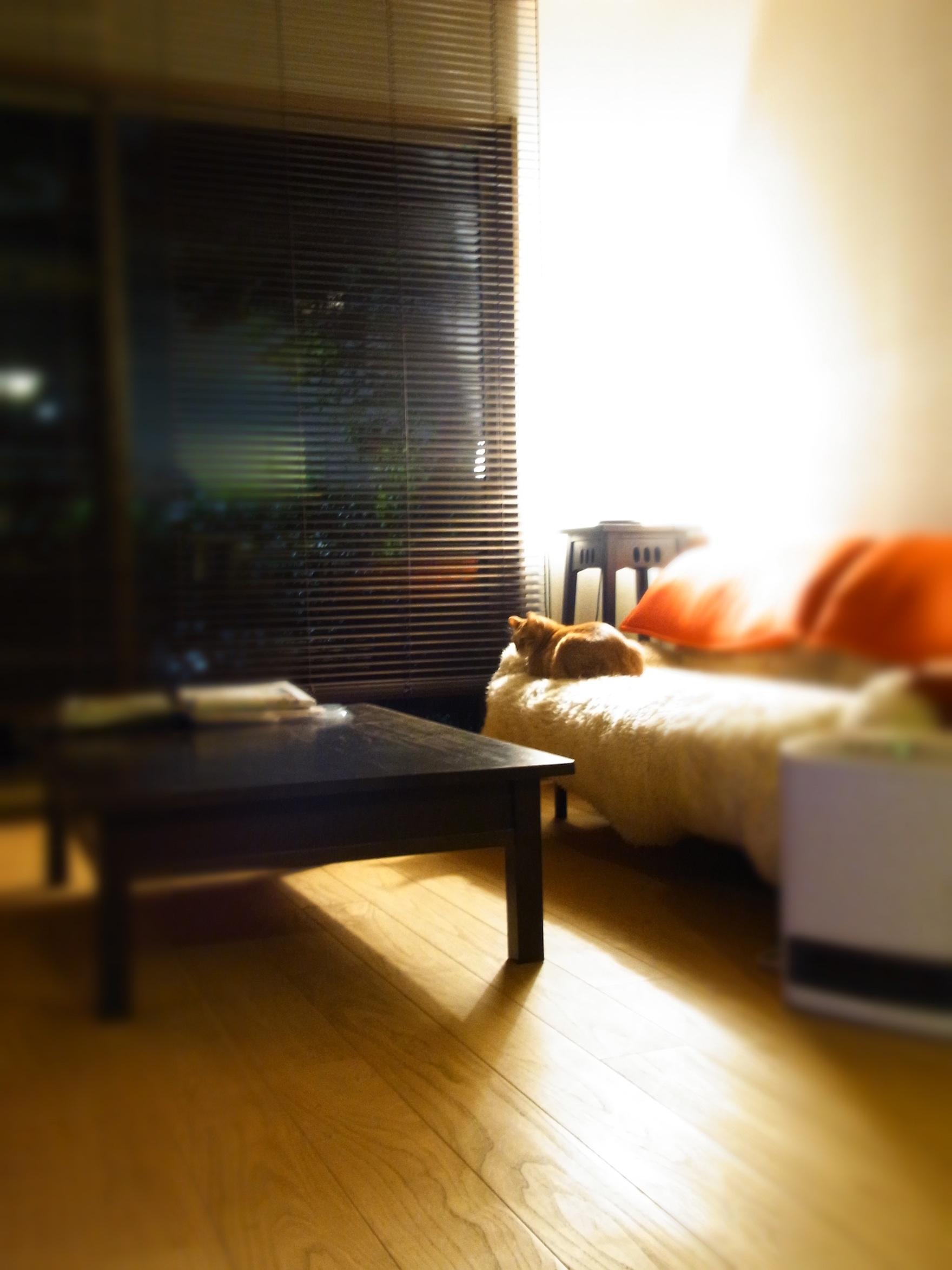Higuchi cat